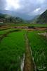 DSCF6492 (Steve Daggar) Tags: vietnam vietnamese sapa candid rice rura mountains hmong