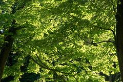 Lviv - perfect green (WolfgangPichler) Tags: lvivlemberg ukraine lviv lvivoblast ua