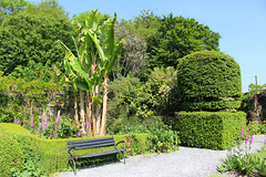 Banana Tree bench (JulieK (thanks for 8 million views)) Tags: kilmokeacountrymanorgardens bench hbm trees htmt hedge touristattraction wexford ireland irish canoneos100d green bananatree lush summer