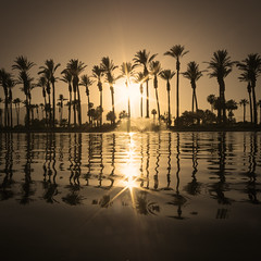 Sun Kissed (johngoucher) Tags: approved jwmarriottdesertsprings marriott hotel travel outdoors nature palmsprings coachellavalley california sonyimages sonyalpha trees palmtrees water lake sunset sun starburst tree sky sepia monochrome