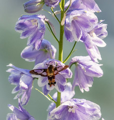 'The Great Pretender' (Canadapt) Tags: flower insect summer keefer canadapt