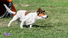 _DSC0517 (SeverX9) Tags: sony alpha 6500 70200gf4 dog run
