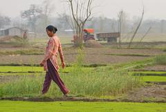 walking between the fields (trying to catch up again !!!) Tags: field crop landscape terai chitwan woman nepaliwoman outdoor outside ivodedecker travel spring walking farmland nepal