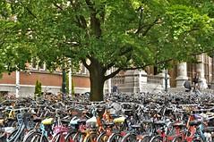 Fietsen boom /Cycling tree (wilma HW61) Tags: boom tree arbre baum albero fietsen ciclo radfahren faireduvélo bicycles rijksuniversiteitgroningen rug groningen nederland niederlande netherlands nikond90 holland holanda paysbas paesibassi paísesbajos europa europe outdoor wilmawesterhoud wilmahw61 tmt wow