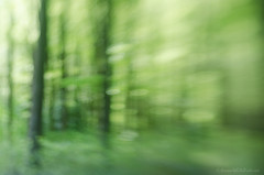 in the woods 45/100x 2018 (sure2talk) Tags: inthewoods woods trees nikond7000 lensbaby lensbabycomposerpro sweet50optic lensbabylove 100xthe2018edition 100x2018 image45100 blur tilt 100shotswithalensbaby 45100x2018