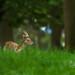 Semilibertad (ruben diez cuesta) Tags: phoenix park nikon d850 irlanda ireland