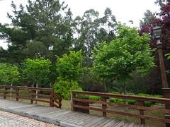 Vegetación en el parque de San roque de Ribeira(Coruña-España) (2) (Los colores del Barbanza) Tags: vegetación parque de san roque végétation barbanza coruña