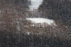 Winterscape (luigig75) Tags: abruzzo appennino italia italy trees mountain montagna alberi neve clouds forest foresta bosco beechwood canon 70d 70200f4l canonef70200mmf4lusm landscape