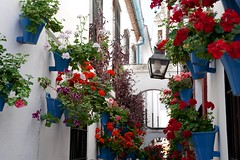 Street of flowers, Cordoba (Joe Lewit) Tags: variosonnart281635 cordoba spain streetofflowers pots geraniums