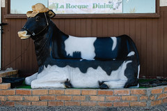 Cow Bench (Bracus Triticum) Tags: cow bench wawanesa マニトバ州 manitoba canada カナダ 5月 五月 早月 gogatsu satsuki fastmonth 2018 平成30年 summer may