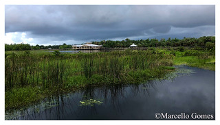 Green Cay (A beloved wetland area)