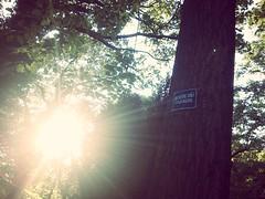 ...fairy tales can come true... (***étoile filante***) Tags: sonnenschein sonne sonnenstrahlen sun sunshine natur nature poesie poetisch poetic emotional emotions liebe love soul soulful heavenly heaven baum tree licht light expressive