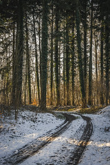 Last Winter (tehroester) Tags: nature forest snow sun winter light fantastic golden hour tracks trees pine sony alpha a7 zeiss 2470 sunset germany badenwuerttemberg ngc