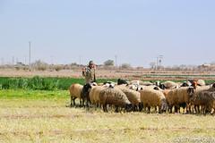 20180328-_DSC0361.jpg (drs.sarajevo) Tags: iran ruraliran farsprovince