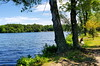 Franklin Lakes Nature Preserve (SurFeRGiRL30) Tags: trees lake franklinlakesnaturepreserve franklinlakesnj nj newjersey beautiful nature hiking walk trail water greenblue green blue bluesky spring summer june 2018 clouds plants