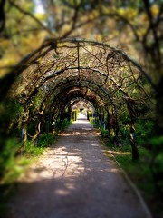 Garden Path (paulwaynemoore) Tags: northwales countryside woodlands paulwaynemoore iphoneography