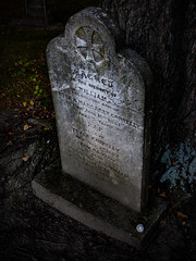 The Seashell (Steve Taylor (Photography)) Tags: seashell grave sacredtothememory headstone william cross shell memorial dark spooky sad stone newzealand nz southisland canterbury christchurch city perspective gravestome tombstone leaves tree trunk bark