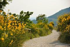 AVVOLTI DAL GIALLO (davidetavian72) Tags: pianorodelmottolone collieuganei padova parco giallo sentiero natura outdoor nikon d3300 sigma1770