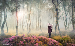 Where (Jean-Michel Priaux) Tags: girl women nature forest light photoshop trees poetry story alone lonesome lonely flowers deep scary rain fog mist myst mysterious mystical paint painting mattepainting paintingmatte dream