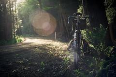 Dudleyville. Freshly Graded. (koperajoe) Tags: woodland flare ferns panniers roadslikethese cycling westernmassachusetts backroads bicycle gravelgrinding cyclotouring velo