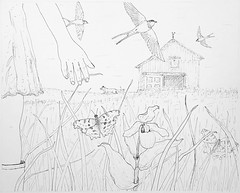 MeadowWalk-Barn1 (Alex Hiam) Tags: pen ink girl boots nature grass hay meadow barn swallow fox comma butterfly drawing sketch series hiam ladyslipper wildflower illustration