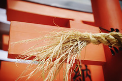 Vermilion and gold (Eric Flexyourhead) Tags: higashiosaka higashiosakashi 東大阪市 osaka 大阪 kansai 関西地方 japan 日本 ishikiri 石切 ishikirijinja japanese shrine shinto detail fragment rope straw shimenawa 標縄 注連縄 七五三縄 torii 鳥居 red vermilion shallowdepthoffield sonyalphaa7 zeisssonnartfe55mmf18za zeiss 55mmf18