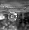 Through a crystal ball (Rosenthal Photography) Tags: treu ff120 asa125 bnw schwarzweiss anderlingen 20180502 stilleben glaskugel ilfordfp4 familie mittelformat städte garten rolleiflex35f bw 6x6 rodinal15021°c12min analog teekanne dörfer siedlungen crystalball crystal ball garden teapot rollei rolleiflex 35f f35 75mm sk schneiderkreuznach rollinar rollinar2 ilford fp4 fp4plus rodinal 150 epson v800