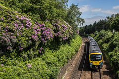 Greenfield bound Train - Saddleworth (Craig Hannah) Tags: train tracks greenfield saddleworth plant trees rhododendron june 2018 westriding yorkshire england uk networkrail northernrail oldham greatermanchester craighannah photography canon photos pennine transpennine railway