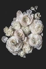 (Rebecca Watson Photography) Tags: ranunculus stilllife flowers flowerart fineartphotography pale