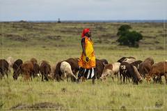 _DSC0111 (Eykat) Tags: baringo kenya africa afrique safari maassaï guifette boat bird fishmen pêcheur bateau balsa ambach njemp pokot mara chlidoniashybrida whiskeredtern