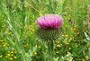 Primavera sorprendente (kirru11) Tags: campo flores cardo hierba quel larioja españa kirru11 anaechebarria canonpowershot