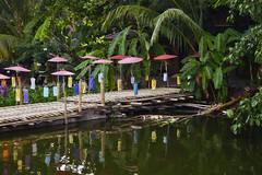 Pond at Wat Jedlin (Thomas Mülchi) Tags: chiangmai chiangmaiprovince thailand 2018 buddhism buddhisttemple temple sunny watjedlin pond water umbrellas changwatchiangmai th
