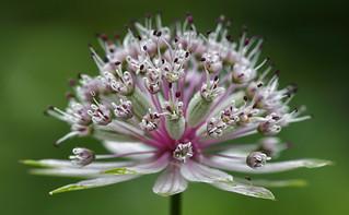 A Floral Crown
