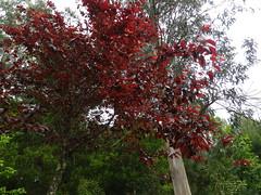 Vegetación en el parque de San roque de Ribeira(Coruña-España) (3) (Los colores del Barbanza) Tags: vegetación parque de san roque végétation barbanza coruña