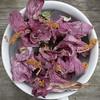 Hibiscus (jlp771) Tags: fleur flower dry macro canon 80d hibiscus pink rose 60mm nature fannée