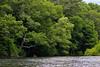 Spring paddle (cheryl.rose83) Tags: kayaking charlesriver river trees kayak