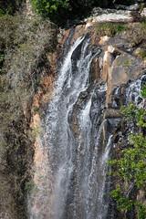 Australia_2018-138.jpg (emmachachere) Tags: subtropical trees hike waterfall boatride springbrook australia rainforest kanagroo animals koala brisbane boat lonepinekoalasanctuary