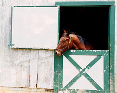longing (tonnycdl) Tags: horse stall stable chestnutmare dutchdoor