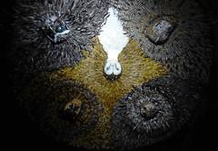 P1340073 (a_ivanov2001) Tags: musée de la chasse et nature