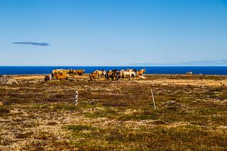 Island Nord2018_057