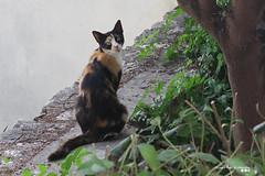 Don't you feel scared. (Κώστας Καϊσίδης) Tags: cat animal garden scared outdoor outside look pet nature greece hellas