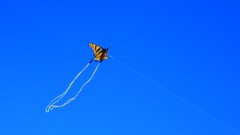 Go Fly A Kite! (Viejito) Tags: kite vlieger cerfvolant cometa pipa 연 凧 风筝 saranggola aquilone diều drachen воздушныйзмей pismobeach california slo county usa unitedstates geotagged geo:lat=35139986 geo:lon=120644967 amerika amérique américa america waterfront beach playa praia sea pacific ocean pier pacificocean canon powershot s100 canons100 string fun blue sky monarch butterfly tail