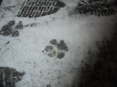 681 (en-ri) Tags: orme impronte sony sonysti bianco neve snow cold freddo inverno winter cane dog uomo man paws zampe