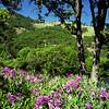 Along the Klickitat River (Gary L. Quay) Tags: klickitat river washington water wildflowers spring 2014 landscape hasselblad 500cm carlzeiss gary quay garyquay