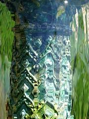 Clear (The-Beauty-Of-Nature) Tags: summer june juni nature germany deutschland plants pflanzen green grün lush sunny sun sonne sonnig warm stuttgart wilhelma botanic garden botanischer garten zoo