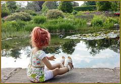 Sanrike ... ich schau mir die Seerosen und die Frösche an ... (Kindergartenkinder 2018) Tags: gruga grugapark essen kindergartenkinder annette himstedt dolls sanrike