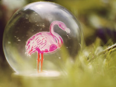 Flamingo Croquet Bokeh [23/52] (Jam-Gloom) Tags: olympusomdem5 olympusomd olympus olympusuk omdem5 omd em5 bokeh bokehlicious bokehful summer cctvlens cctvlenses cctv 35mm fujian fujian35mm fujian35mm17 snowglobe glitterglobe globe snow glitter flamingo primark week23 23 project52 52weekproject 52weeks project522018 2018 2352 52 project week weeks