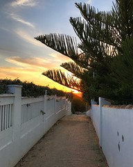 Alleyway Sunset (Marc Sayce) Tags: alley alleyway norfolk island pine sunset calas roche conil frontera costa luz andalucía andalusia spain may 2018