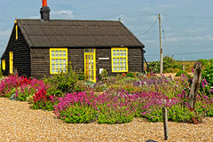 Prospect Cottage (Geoff Henson) Tags: garden cottage dungeness kent summer blooms flowers colours colors yellow black sky shingle