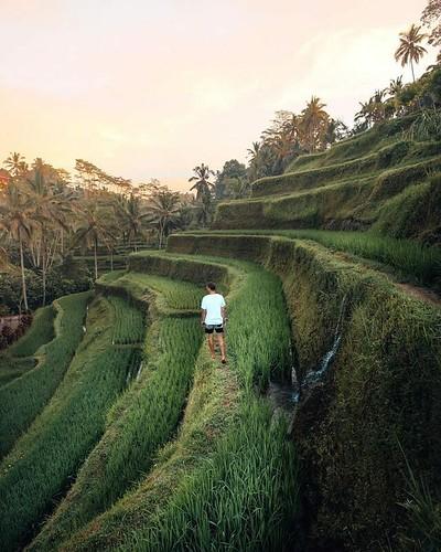 50 shades of green  🌍 Bali, Indonesia |  Sasha Juliard